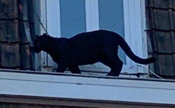 black panther france, black panther france armentieres, black panther france video, black panther france photo