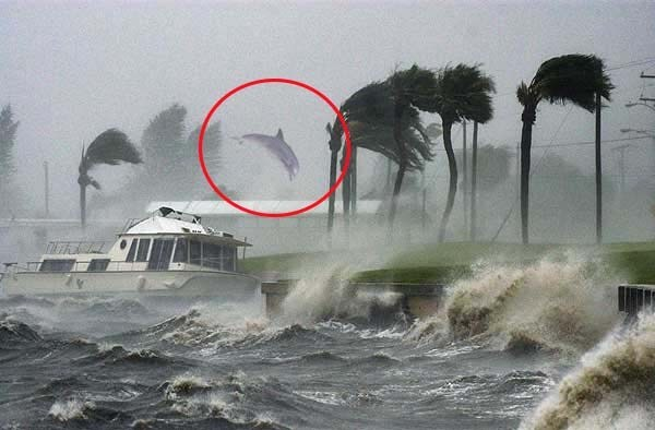 dolphin flying in the winds of Hurricane Dorian, dolphin flying in the winds of Hurricane Dorian picture, dolphin flying in the winds of Hurricane Dorian video