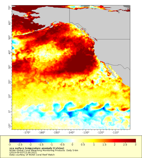 new marine heatwave in the pacific ocean spreads from Alaska to California, new marine heatwave in the pacific ocean spreads from Alaska to California map, new marine heatwave in the pacific ocean spreads from Alaska to California september 2019