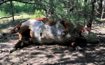 oregon bull mutilations and killings, cattle mutilation, cattle mutilation oregon, cattle mutilation usa, cattle mutilation usa map