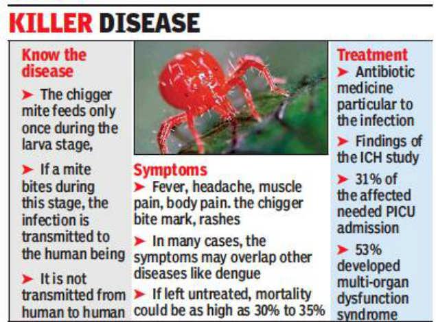 scrub typhus, scrub typhus epidemic starts in India, scrub typhus epidemic starts in India september 2019