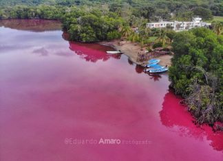 Lagoon turns pink in mexico,Lagoon turns pink in mexico video,Lagoon turns pink in mexico picture, Lagoon turns pink in mexico narda, Lagoon turns pink in mexico photo, Lagoon turns pink in mexico news