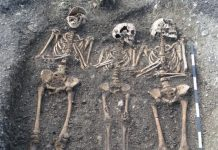 plague origin genetics, plague bacterium genetics, plague origin russia, plague strain origin bacteria
