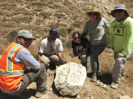 ridgecrest earthquake fossil, ridgecrest earthquake fossil photo, ridgecrest earthquake fossil video, ridgecrest earthquake fossil pictures,Powerful earthquakes reveal mysterious 15-million-year-old fossil in California