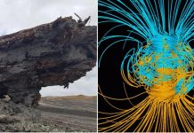 New Zealand: Ancient tree records magnetic field reversal in its ring