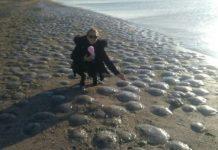 jellyfish stranding azov sea crimea, jellyfish stranding azov sea crimea pictures, jellyfish stranding azov sea crimea video, jellyfish stranding azov sea crimea november 2019