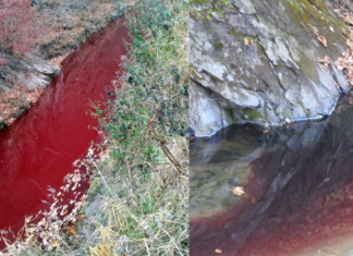 south korea river turns blood red, south korea river turns blood red video, south korea river turns blood red picture, south korea river turns blood red after pig mass culling, south korea river turns blood red after pig mass killing