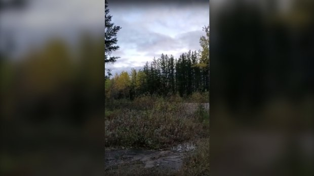 Hunter captures strange howl in northern Ontario wilderness, Hunter captures strange howl in northern Ontario wilderness video, Hunter captures strange howl in northern Ontario wilderness november 2019