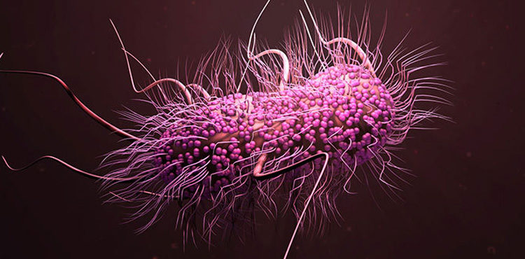 superbug alarm cdc,Rise of drug-resistant superbugs rings alarm bells