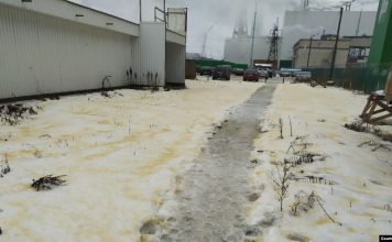 yellow snow russia, yellow snow russia video, yellow snow russia pictures, yellow snow, Yellow snow and birds falling from the sky scare residents of Russian city, Yellow snow and birds falling from the sky scare residents of Russian city pictures