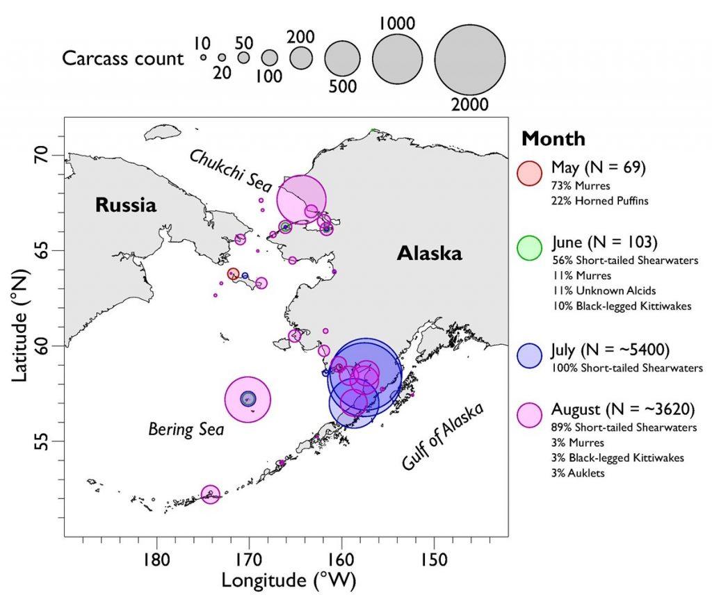 Map of the bird mass die-off in Alaska in 2019, alaska seabird mass die-off