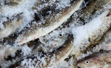 Extremely low cod numbers lead feds to close the Gulf of Alaska fishery for the first time