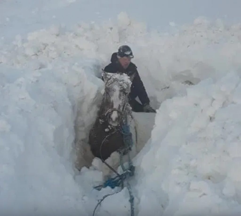 horse stuck in snow in iceland