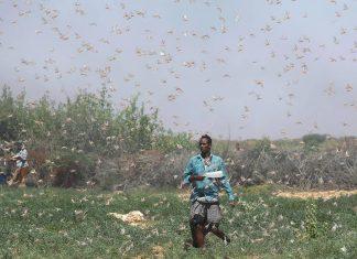 locust invasion somalia, locust invasion somalia video, locust invasion somalia news, locust invasion somalia pictures