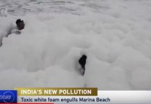 toxic foam chennai beach, toxic foam chennai beach video, toxic foam chennai beach image, toxic foam chennai beach pictures
