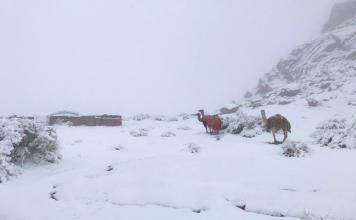Heavy snowfall in Jordan in January 2020, Heavy snowfall in Jordan in January 2020 video, Heavy snowfall in Jordan in January 2020 pictures