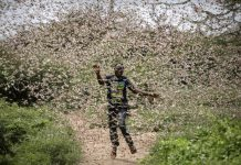 locust invasion africa middle east asia 2020, locust invasion africa middle east asia 2020 video, locust invasion africa middle east asia 2020 pictures