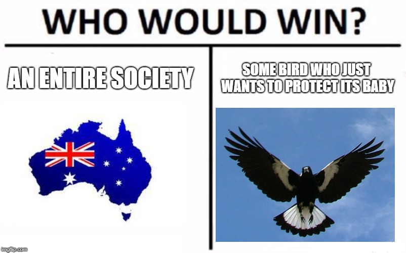Australian magpie imitates fire sirens in video, magpie imitates fire sirens video, video magpie imitates fire sirens