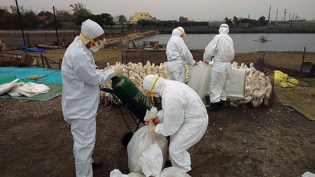 H5N1 Avian Flu china outbreak, H5N1 Avian Flu china outbreak february 2020, H5N1 Avian Flu china outbreak video