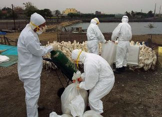 H5N1 Avian Flu china outbreak, H5N1 Avian Flu china outbreak february 2020, H5N1 Avian Flu china outbreak video