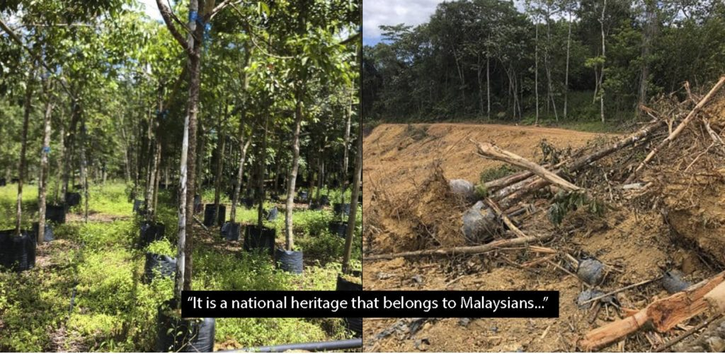 A man spent 20 years planting the largest rainforest nursery in Malaysia and today it is getting bulldozed, A man spent 20 years planting the largest rainforest nursery in Malaysia and today it is getting bulldozed pictures, A man spent 20 years planting the largest rainforest nursery in Malaysia and today it is getting bulldozed videos