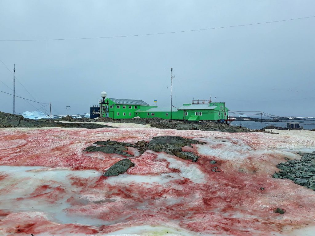 antarctica blood red snow, antarctica blood red snow february 2020, antarctica blood red snow pictures, red snow Ukrainian Antarctic Station