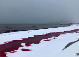 caspian sea turns blood red kazakhstan, caspian sea turns blood red kazakhstan video, caspian sea turns blood red kazakhstan pictures, caspian sea turns blood red kazakhstan february 2020