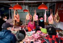 Coronavirus fears force China into mass chicken cull, Coronavirus fears force China into mass chicken cull video, Coronavirus fears force China into mass chicken cull picture, Beijing to import US birds as traffic shutdown leads to poultry feed shortages