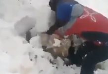 Sheep buried in snow in Iran, Sheep buried in snow in Iran video, Sheep buried in snow in Iran pictures, Sheep buried in snow in Iran february 2020