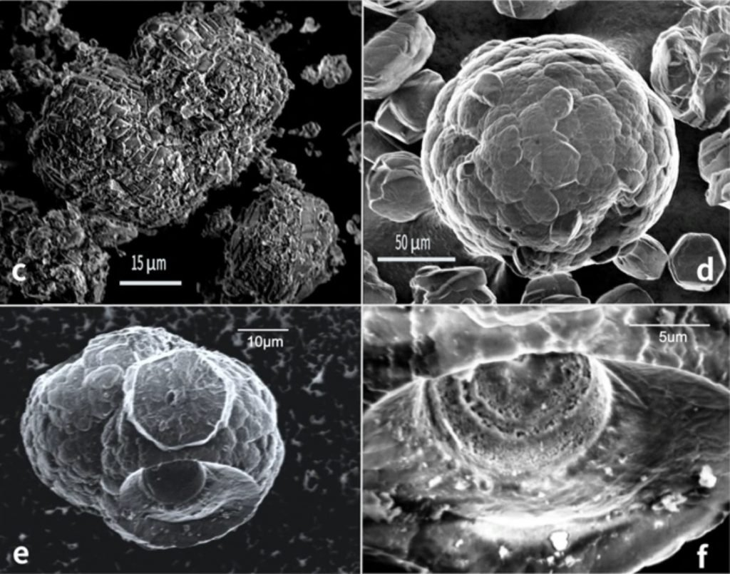 life discovered in methane hydrate flammable ice, flammable ice microbes, methane hydrate life