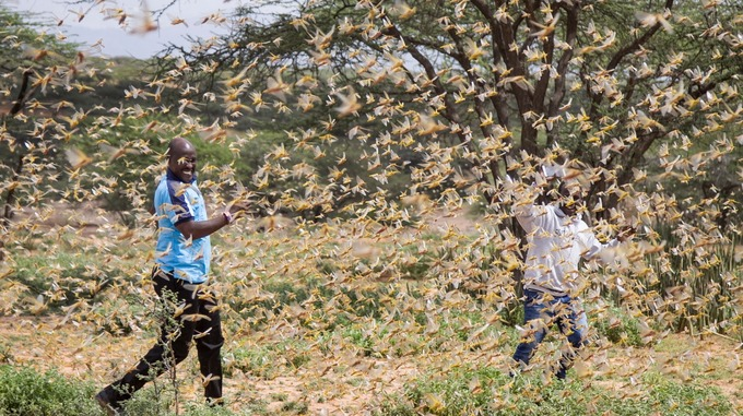Catastrophic locust invasion in East Africa reaches full-blown crisis as the billions of devastating locusts spread and could become the most devastating plague in living memory - Strange Sounds