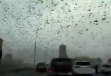 Apocalyptic and biblical plague of locusts invade engulfs Middle East Saudi Arabia, Bahrain, Qatar, yemen on February 20 2020, middle east locusts bahrain saudi arabia qatar yemen february 2020 video, middle east locusts bahrain saudi arabia qatar yemen february 2020 picture