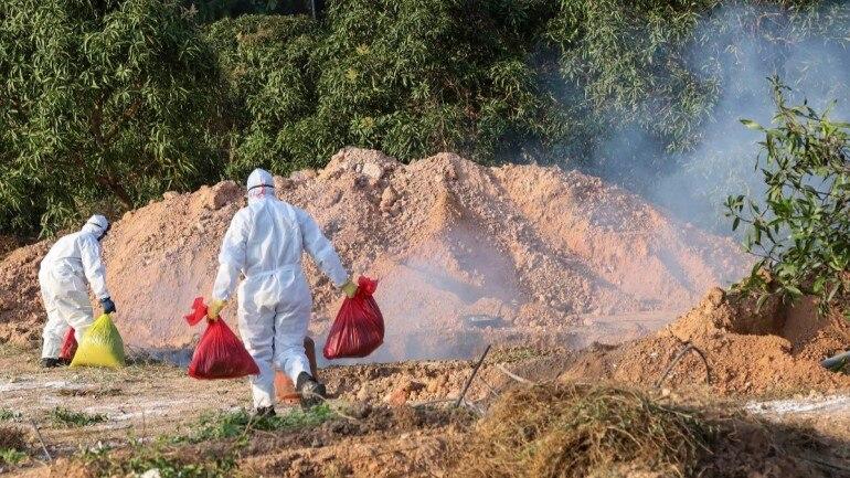 bird flu outbreaks in India during the Corona lockdown, india avian influenza, bird flu india coronavirus outbreak