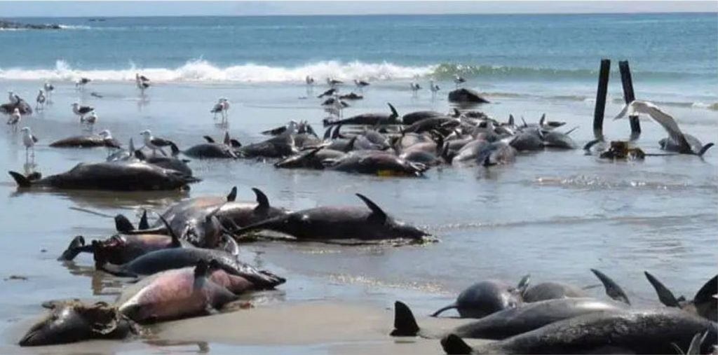 86 dead dolphins discovered dead on a beach in Namibia in March 2020, 86 dead dolphins discovered dead on a beach in Namibia in March 2020 picture, 86 dead dolphins discovered dead on a beach in Namibia in March 2020 video