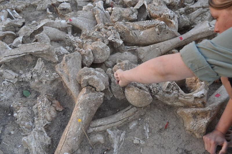 Giant structure built from mammoth bones discovered in Russia by archeologists, mammoth structure russia, thousands of mammoth bones built strange structure in Russia