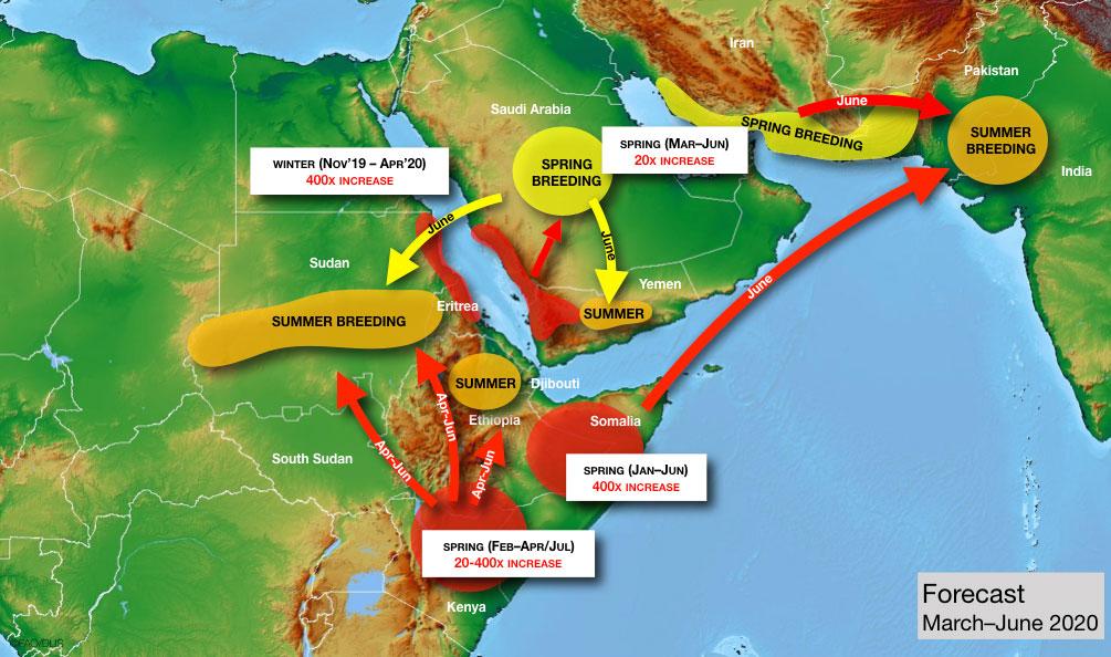 locust plague 2020 forecast map