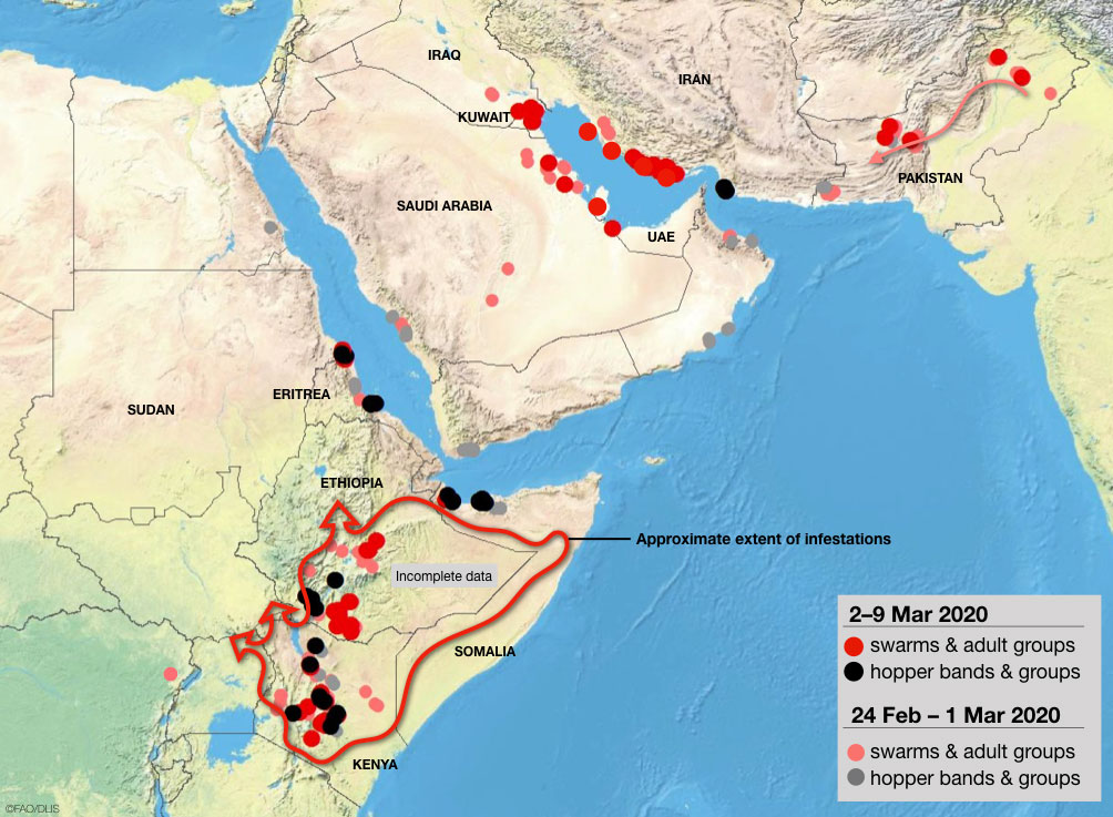 Map showing the current situation of the record-breaking locust plague in 2020,locust plague east africa iran pakistan middle east march 2020