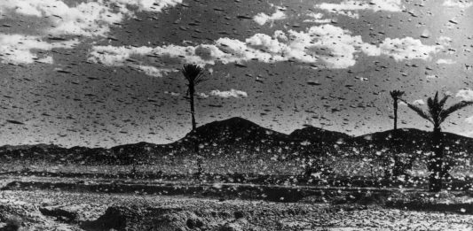locust plague usa great plains, locust plague usa great plains video, locust plague usa great plains 1874, Locust plagues of truly biblical proportions engulfed the U.S. in the 1870s