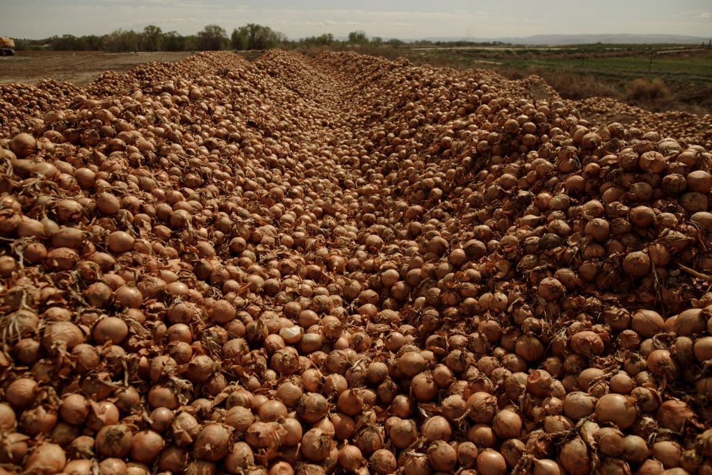 Tons of onions ready to be destroyed on a U.S. farm due to the lockdown, food waste pandemic, food waste pandemic video, food waste pandemic farmers destroy milk, fresh vegetables, millions of eggs