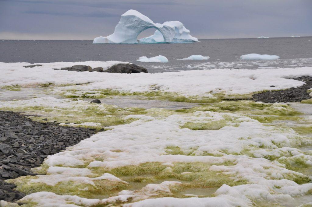 Green snow in Antarctica, green snow antarctica, green snow antarcticapictures, green snow antarctica video