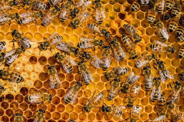 honey bees pandemic parasitic mite, honey bees, honey bee pandemic