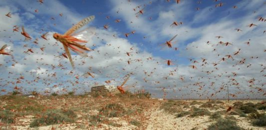 A locust swarm of biblical proportions is expected to invade Kenya via Ethiopia, for the second time this year.