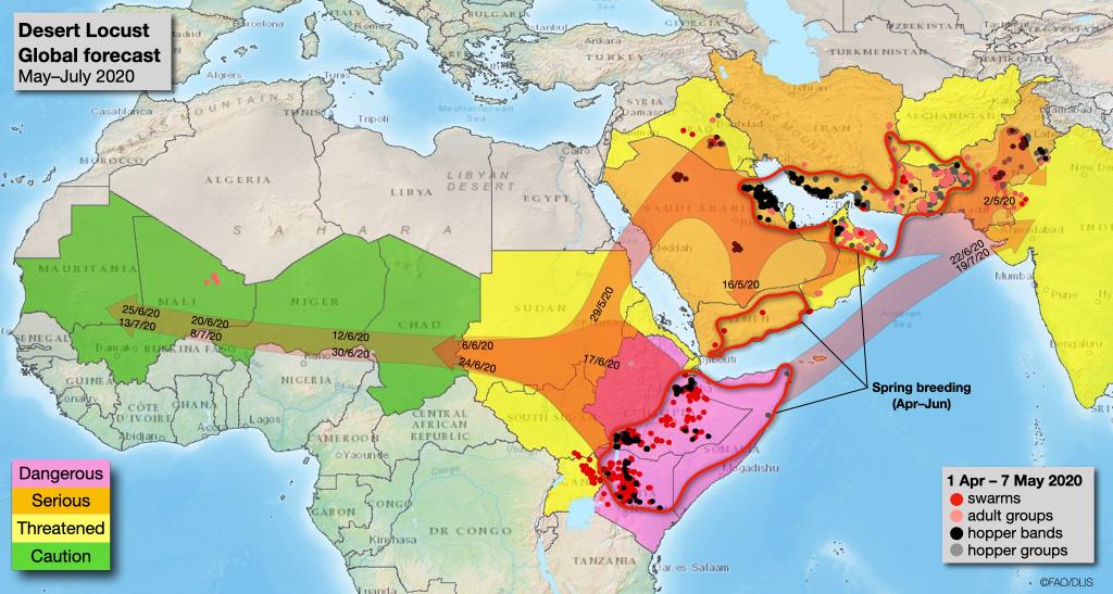 new locust invasion africa may 2020, new locust invasion africa may 2020 map, new locust invasion africa may 2020 video, new locust invasion africa may 2020 picture