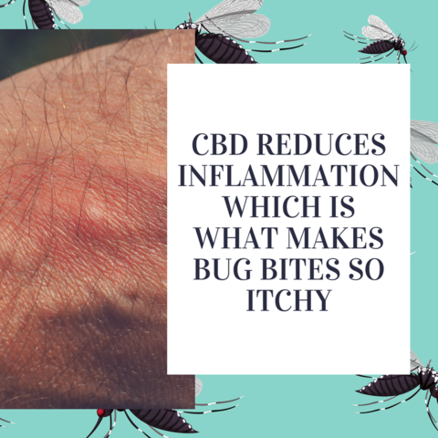 CBD to treat insect bites and stings, Use CBD to treat insect bites and stings