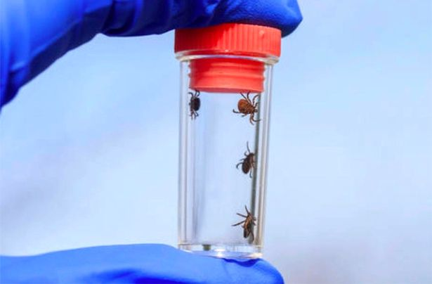 Apocalyptic swarm of deadly mutant ticks invade Russia