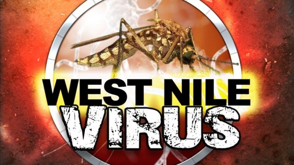 west nile virus usa danger pandemic birds usa