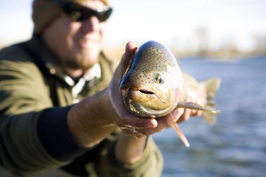 A novel bacterial infection is killing tens of thousands of trout in Victorville California