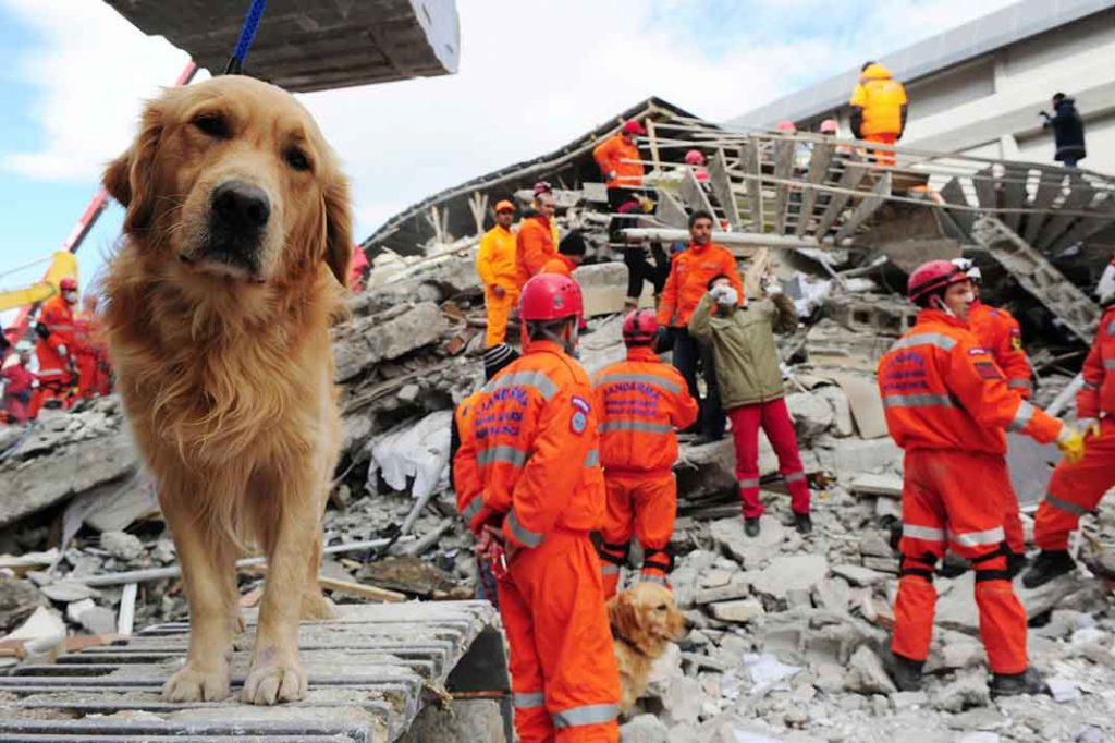 Can animal predict earthquakes, animal earthquake prediction, animal early warning signs earthquake