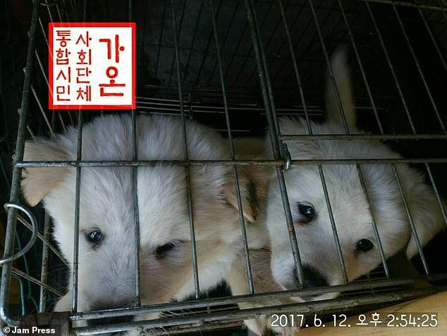dog soup south korea, days of bok, boknal south korea, korea dog soup festival
