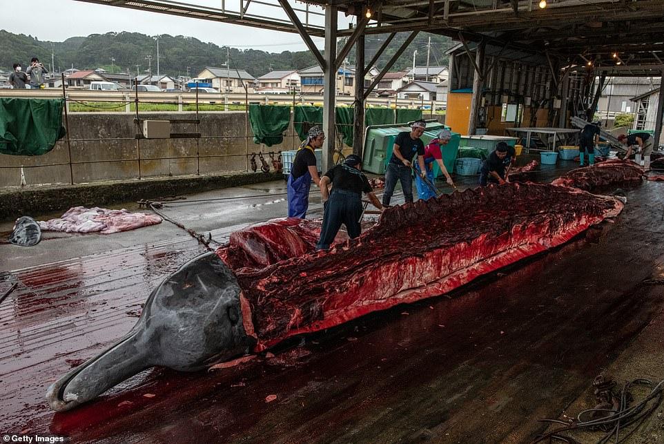 japan kills whales again, japan kills whales again july 2020